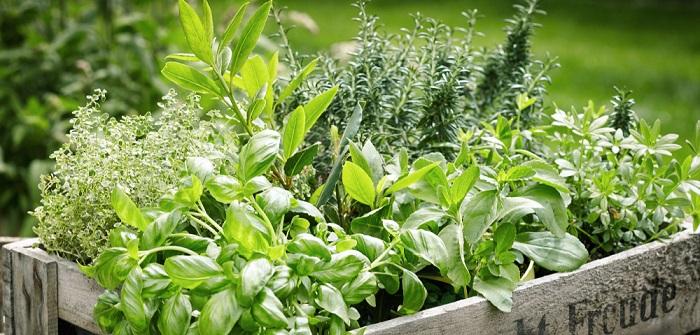 Kräutergarten: Anlegen & Pflegen ( Foto: Shutterstock-stockcreations)