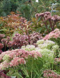 Kräutergarten: Anlegen & Pflegen