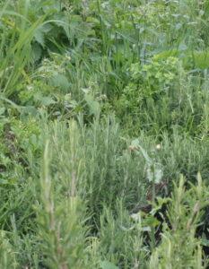 Kräutergarten in der Küche: Tipps & Pflanzliste
