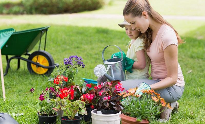 Blumen, Sträucher und andere Pflanzen benötigen Wasser, sobald sie in die Wachstumsphase kommen. (Foto-Shutterstock-wavebreakmedia )