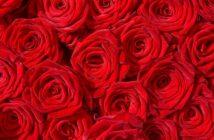 Schöne Blumen zum Verschenken: diese hier kommen immer gut an (Foto: shutterstock - mahey)