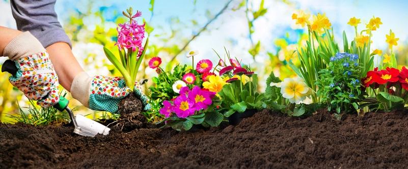 Hobbygärtner sollten nicht zu spät im Jahr mit der Gartenarbeit beginnen.  ( Foto: Shutterstock-Alexander Raths )