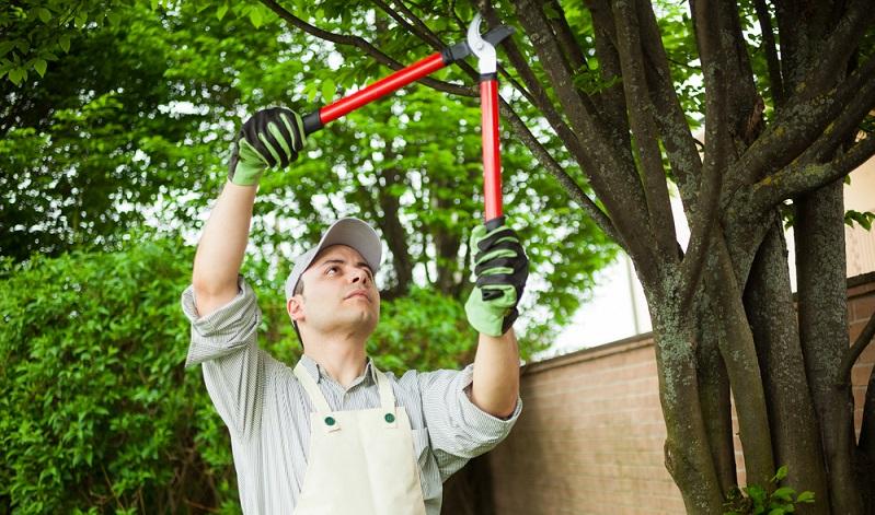 Im März werden die Obstbäume geschnitten wobei der Schnitt nicht zu radikal ausgeführt werden darf. ( Foto: Shutterstock-Minerva Studio )