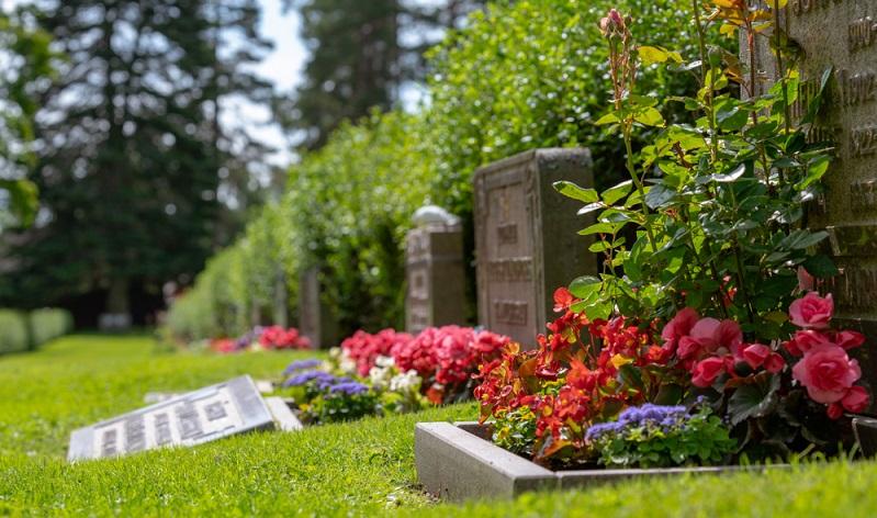 Hier wurde auf eine stufige Bepflanzung gesetzt. Zuerst steht das hohe Grabmal, danach folgt als erste Abstufung die Rose, die gerade ihre Blüten treibt.  (Foto: Shutterstock-Magnus Binnerstam )