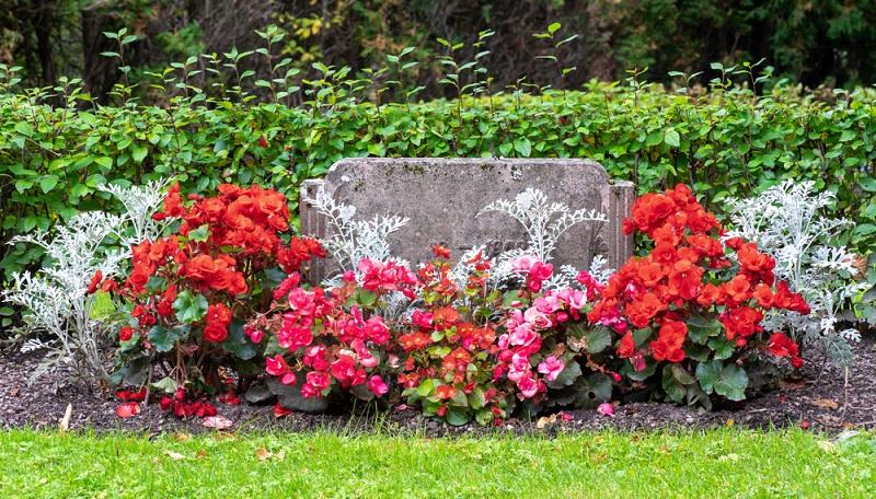 Diese Form der Grabgestaltung erfordert wenig Pflege, die roten Sommerblumen müssen lediglich regelmäßig gegossen werden. (Foto: Shutterstock-Magnus Binnerstam_)